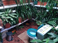 Green toilet at the Macadamia farm